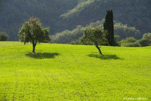 Tuscan field-LL